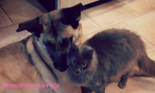 cat and dog friends, cute cat and dog, family pets,