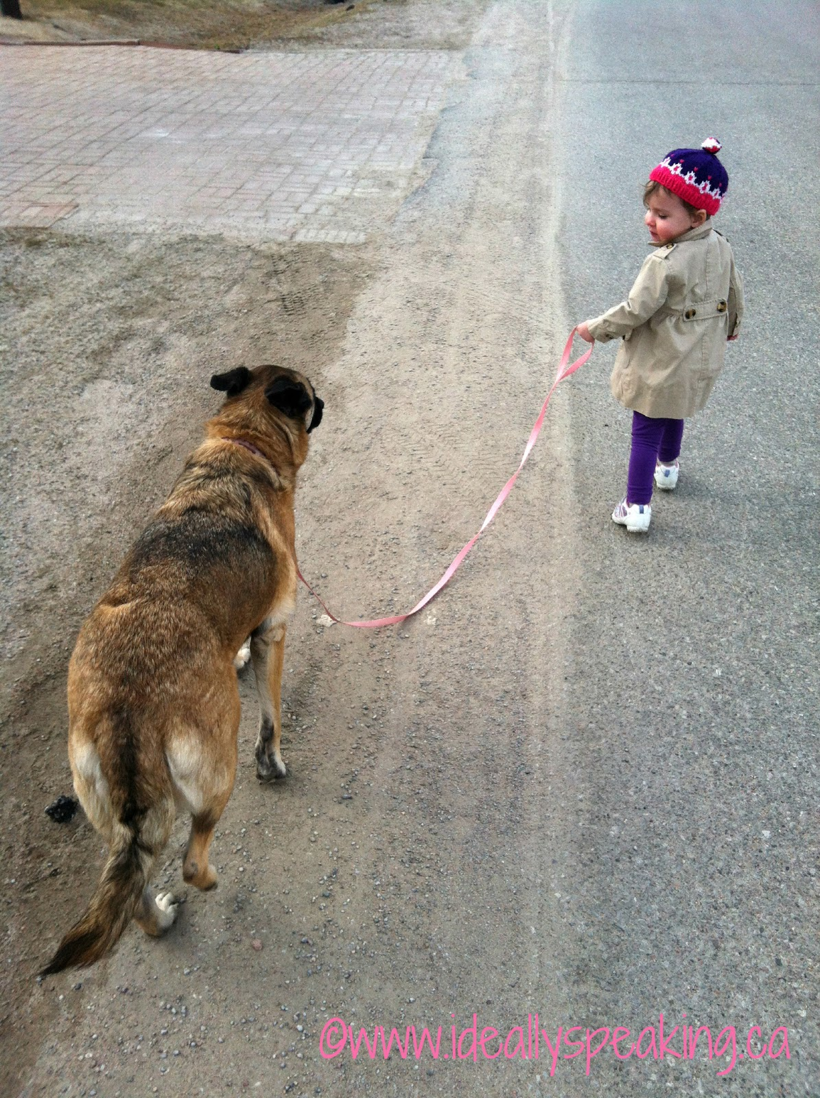 toddler walking dog, parenting a toddler, parenting, family, Canadian mom blogger,