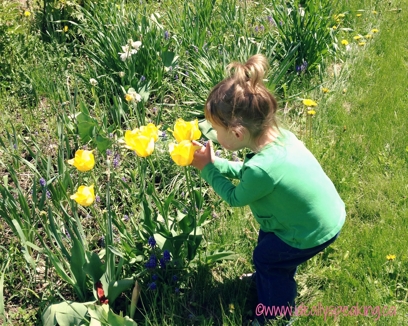 Toddler smelling flowers in the garden