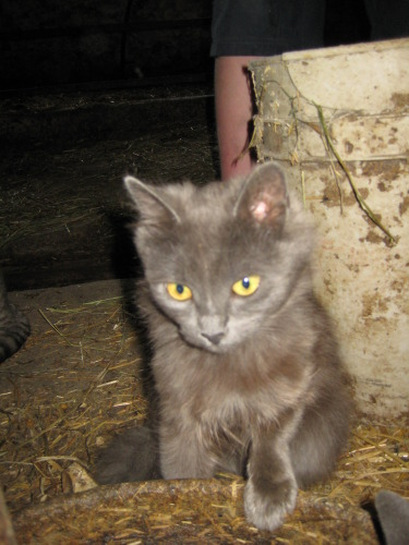 When we first discovered Scurvy in my in-laws barn. Grooming herself while the other cats fought for food.